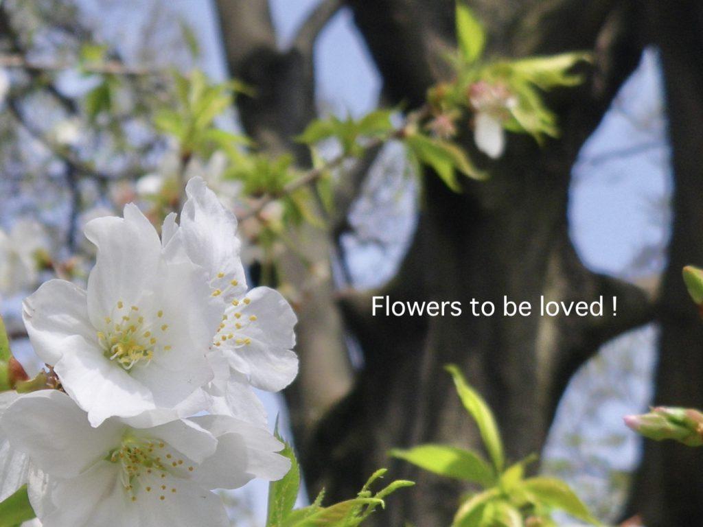 愛でるべき花たち...